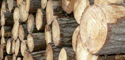 troncos-index4